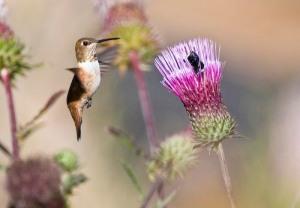 humingbird and beetle